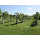 Vineyard & Winery For Sale - Vermont Photo 1