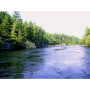 4 Treed Building Lots On Beautiful French River Photo 1