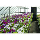 Nursery Greenhouse And Floral For Sale Photo 1