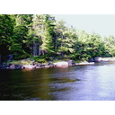 4 Treed Building Lots On Beautiful French River Photo 3